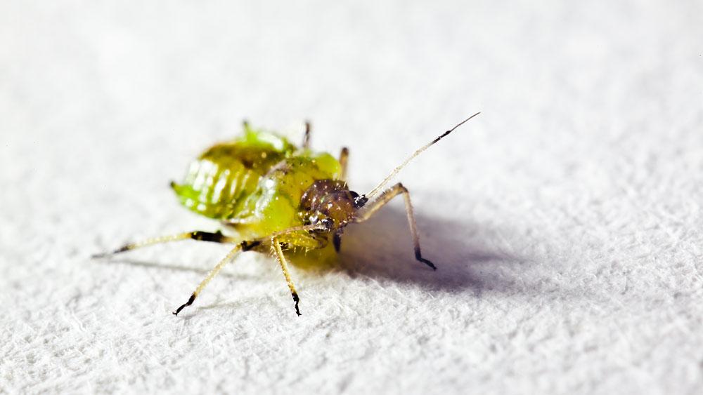 Unbekanntes Insekt
